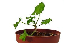 Free Young Plant In Pot Stock Photo - 8272360