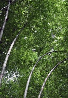 Free Bamboo Stock Photos - 8273803