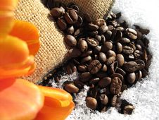 Coffee Beans And Tulips Stock Photo