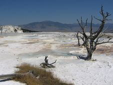 Free Yellow Stone National Park Landscape Stock Photo - 8275760