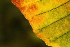 Free Yellow Leaf Royalty Free Stock Image - 8276196