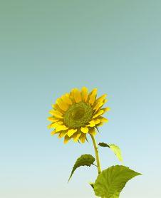 Free Sunflower Stock Photo - 8276770