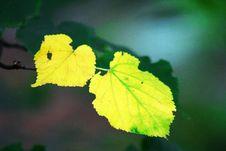 Free Yellow Leaf Stock Image - 8276821