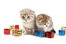 The Kittens Royalty Free Stock Photo