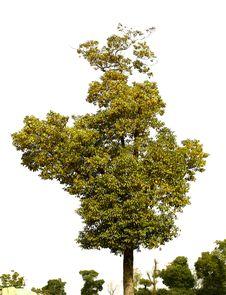 Free Tree Stock Image - 8278771