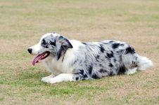 Free Dog Stock Photo - 8279250