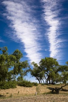 Free Trees And Clouds Royalty Free Stock Photos - 8279838