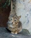 Free Street Cat Royalty Free Stock Photo - 8280105