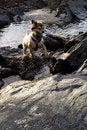 Free Swimming Dog Royalty Free Stock Image - 8285506