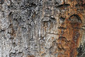 Free Old Bark Stock Photography - 8287872