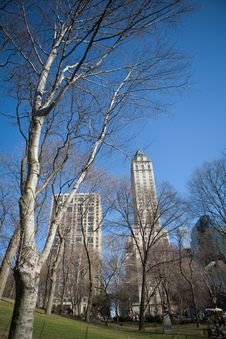 Free Trees In Winter In Central Park Stock Photos - 8280043