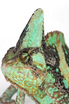Free Chameleon Royalty Free Stock Photos - 8280108