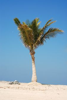 Free Palm On The Beach Royalty Free Stock Image - 8280196