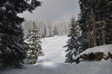 Free Winter Stock Photos - 8280403