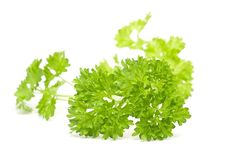 Free Parsley Stock Photo - 8280470