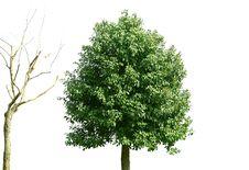 Free Trees Royalty Free Stock Photos - 8281138