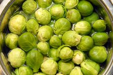 Free Brussels Sprouts In Water Stock Photos - 8281473
