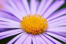 Free Violet Flower Stock Images - 8281534