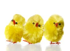 Free Three Easter Chicks Royalty Free Stock Photos - 8281688