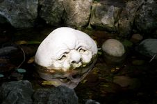 Free The Face In The Pond Royalty Free Stock Images - 8282439