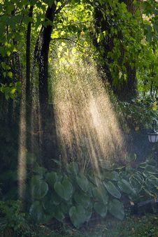 Free Rainshower Royalty Free Stock Image - 8283006