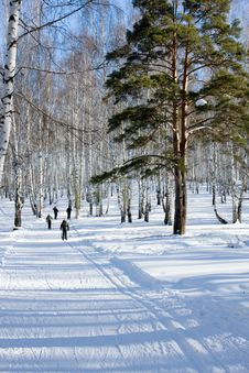 Free Winter Forest Royalty Free Stock Photos - 8283588