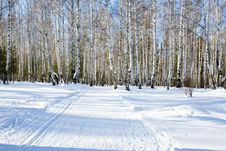 Free Winter Forest Stock Images - 8283644