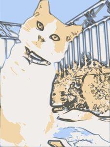 Free Cat Royalty Free Stock Photo - 8284125