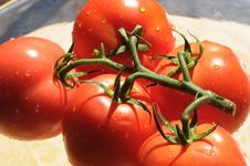 Tomatoes With Rain Drops 2 Royalty Free Stock Photo