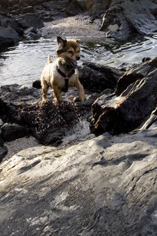 Swimming Dog Royalty Free Stock Image