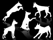 Dog Attitudes Royalty Free Stock Images
