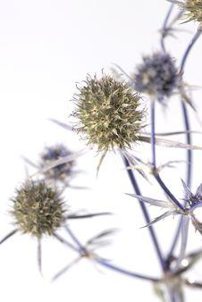 Free Herbarium Stock Images - 8287344