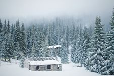 Old Shabby House In The Snowy Forest Stock Image