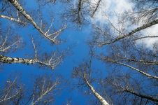 Free Blue Sky, White Clouds And Top Of Trees. Stock Image - 8287761