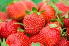 Heap Of Ripe Strawberries Stock Photography