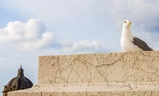 Free Seagull Bird, Rome, Italy Royalty Free Stock Photo - 82890245