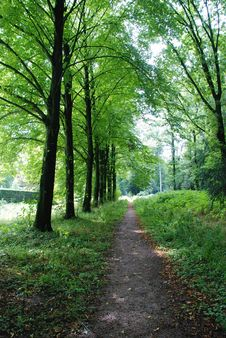 Free Sunny Forest Path Stock Photo - 82891590