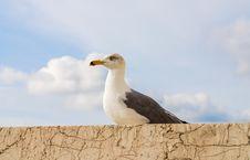 Free Seagull Bird, Rome, Italy Stock Image - 82893981