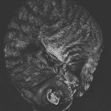 Free Cat Curled Up Stock Photography - 82894632