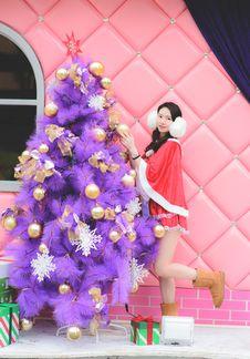 Free Christmas Tree, Purple, Plant, Window Royalty Free Stock Image - 82896516