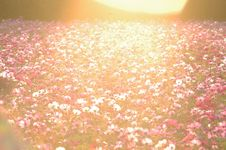 Free Field Of Wildflowers At Sunset Stock Photography - 82897222