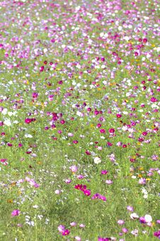 Free Wildflowers In Field Royalty Free Stock Photography - 82897467