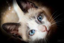 Free Nose, Head, Cat, Felidae Royalty Free Stock Photos - 82898408