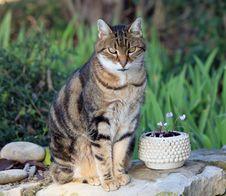 Free Cat, Plant, Felidae, Carnivore Stock Images - 82898484