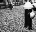 Free Fire Hydrant Stock Images - 8293384