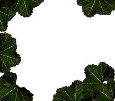 Free Border Of Leafs Stock Images - 8290164