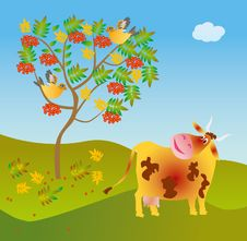 Free A Cow Looks At A Wild Ash Stock Images - 8291004