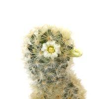 Free Studio Shot Cactus Royalty Free Stock Image - 8292176