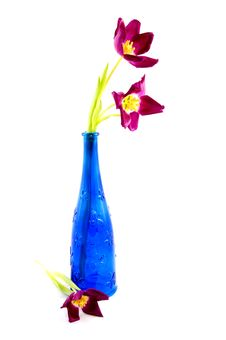 Blue Bottle With Purple Tulips Royalty Free Stock Photography