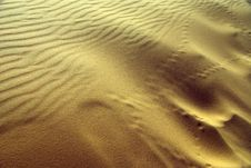 Free Dunes Royalty Free Stock Photography - 8294937